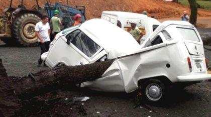 Imortal: Vídeo mostra Kombi rodando depois de ser (brutalmente) atingida no meio por árvore